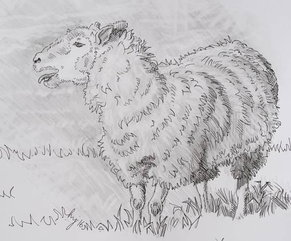 Drawing - Sheep Bleating Pencil Drawing - Baa Baa Blah by Mike Jory