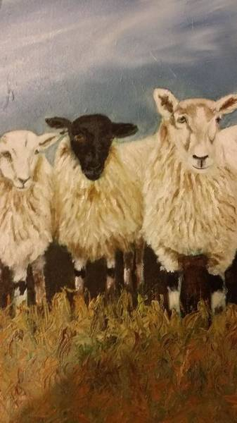 Photograph - Sheep by Elizabeth Hoare Gregory