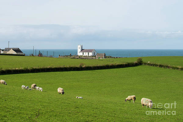 Wall Art - Photograph - Sheep Grazing On Irish Coastline by Juli Scalzi