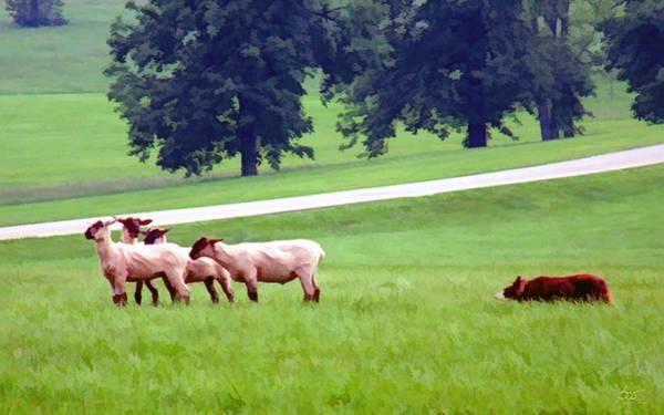 Photograph - Sheep Herding by Sam Davis Johnson