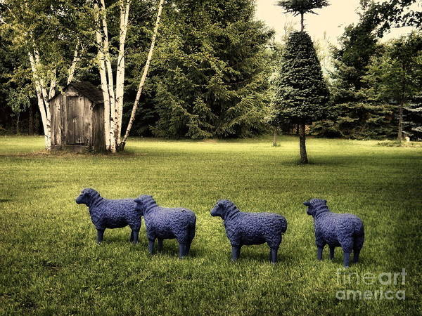 Photograph - Sheep In A Row  by Andrea Kollo