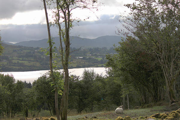 Photograph - Sheep Near Lough Eske by John Moyer