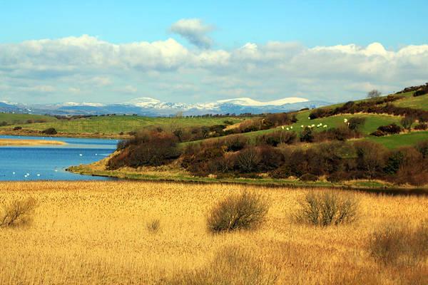 Photograph - Sheep On The Hillside by Jennifer Robin