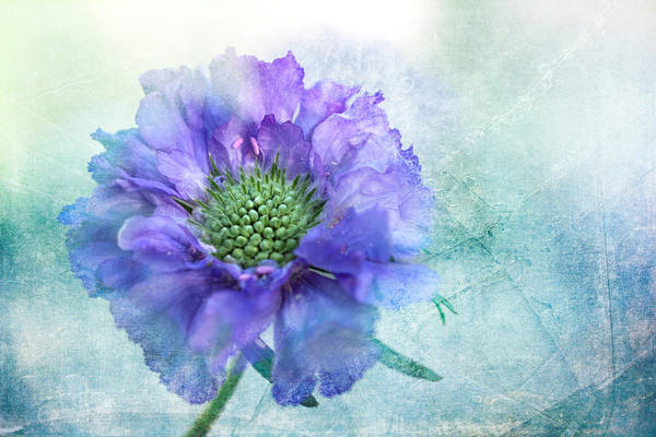Wall Art - Digital Art - Sheer Lilac by Terry Davis