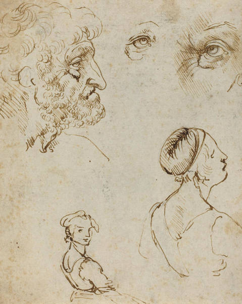 Drawing - Sheet Of Studies  by Leonardo da Vinci