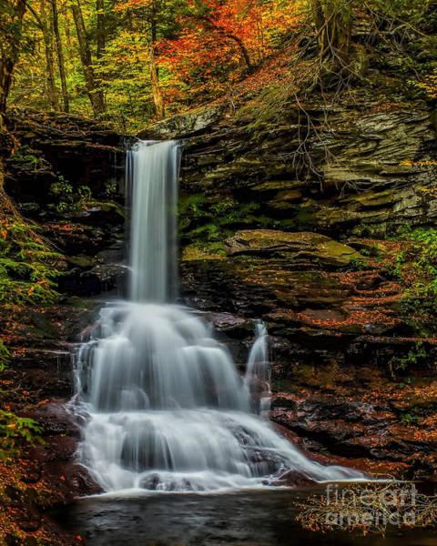 Photograph - Sheldon Reynolds Falls by Nick Zelinsky
