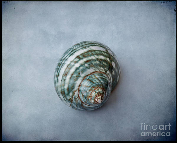 Photograph - Shell #01 by Hans Janssen
