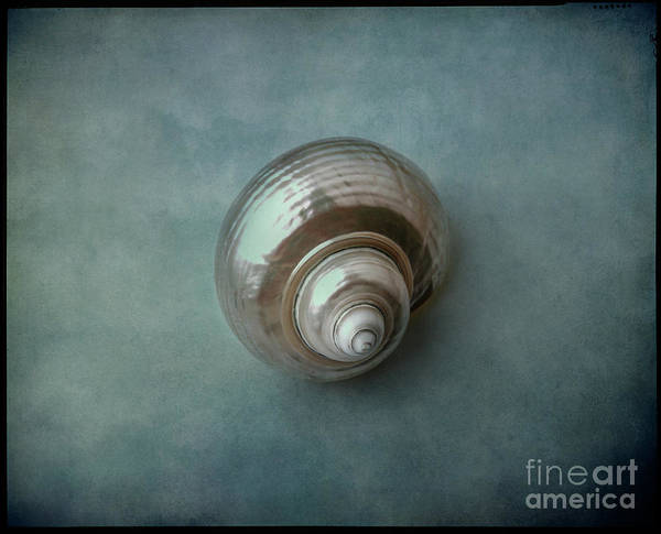 Photograph - Shell #09 by Hans Janssen