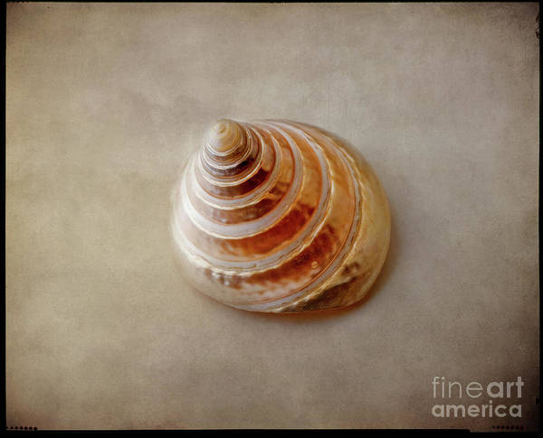 Photograph - Shell #11 by Hans Janssen