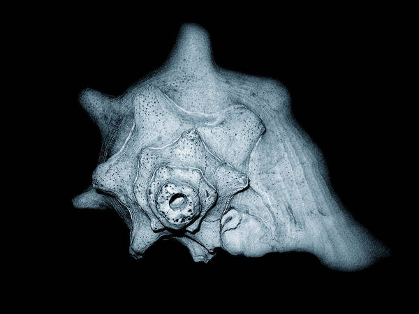 Photograph - Shell by Amber Flowers