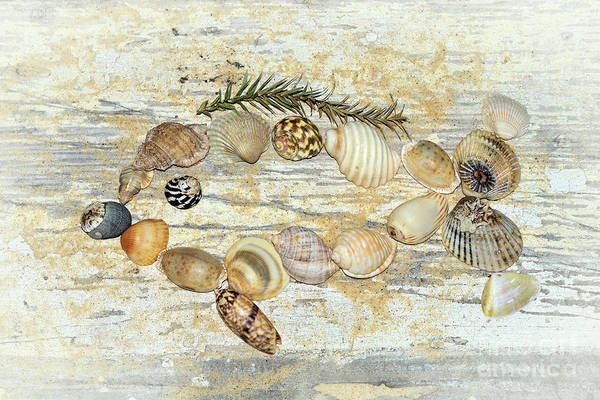 Wall Art - Photograph - Shell Fish By Kaye Menner by Kaye Menner