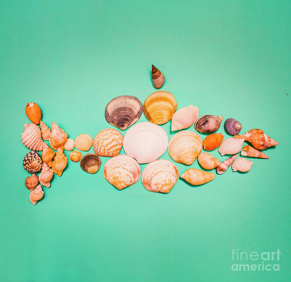 Ornamental Fish Photograph - Shell Fish by Jorgo Photography - Wall Art Gallery