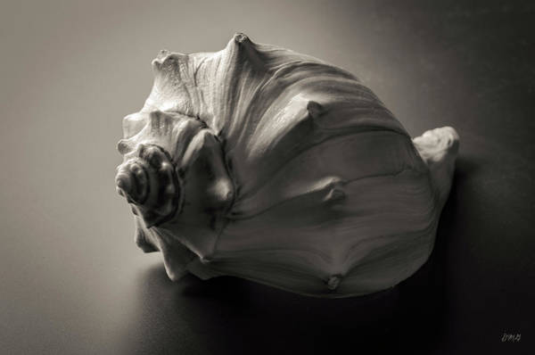 Photograph - Shell I Toned by David Gordon