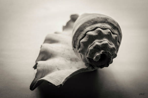 Photograph - Shell II Toned by David Gordon