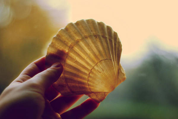 Items Photograph - Shell by Art of Invi