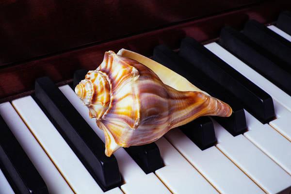 Wall Art - Photograph - Shell On Piano Keys by Garry Gay