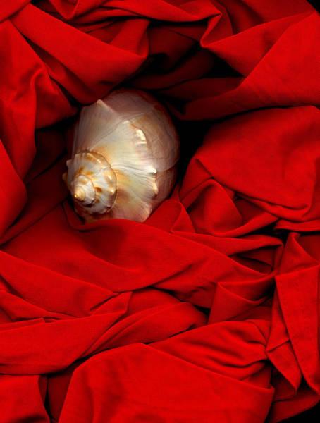 Photograph - Shell On Satin by Lynda Lehmann