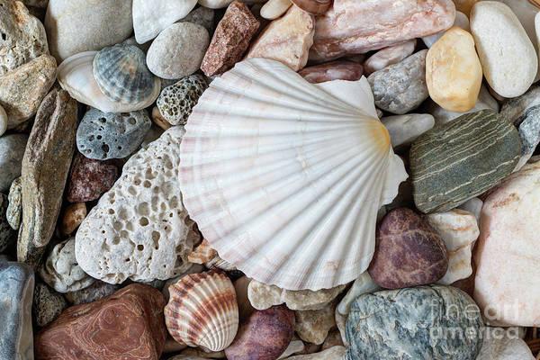 Wall Art - Photograph - Shell On Sea Pebble Stones by Michal Boubin