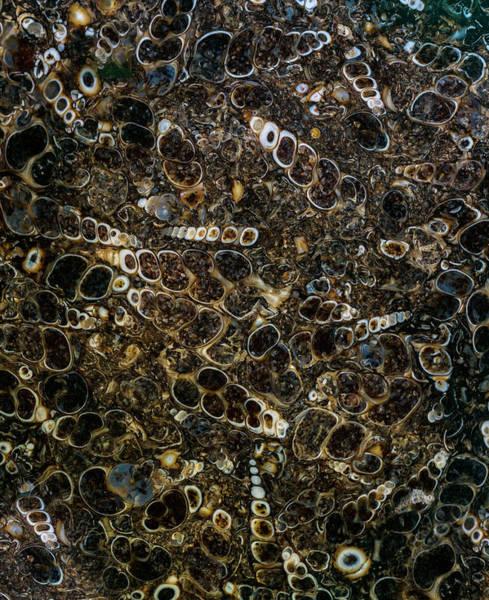 Photograph - Shell Rock by Jaroslaw Blaminsky