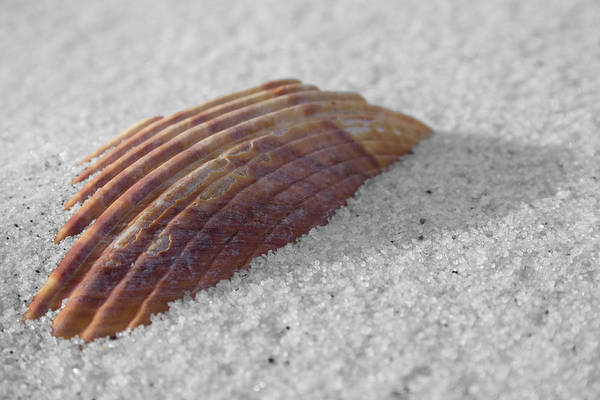 Photograph - Shell Shadow by Dylan Punke
