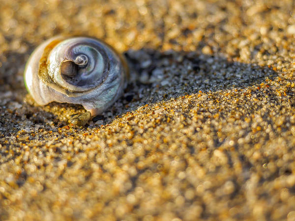 Shell Art Print by Steve Spiliotopoulos