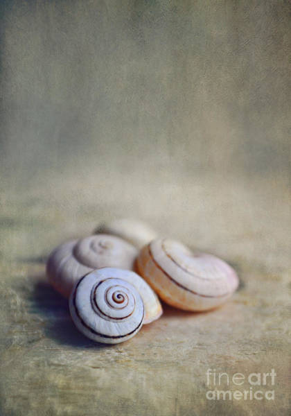 Wall Art - Photograph - Shell Still Life by Lyn Randle