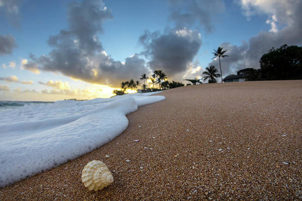 Out Of The Ordinary Photograph - Shell Surprise by Sean Davey