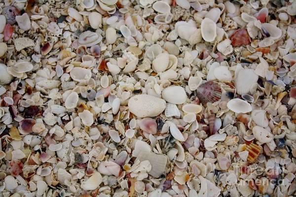 Wall Art - Photograph - Shells And More Shells by Mesa Teresita