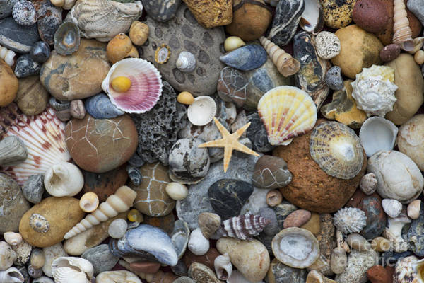 Photograph - Shells And Pebbles by Tim Gainey