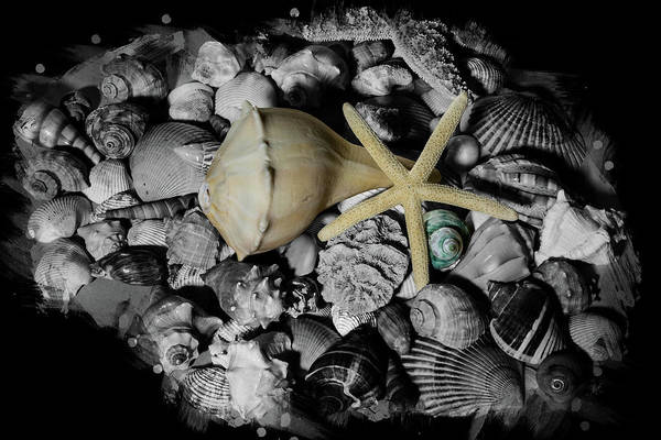 Photograph - Shells And Starfish by Angie Tirado