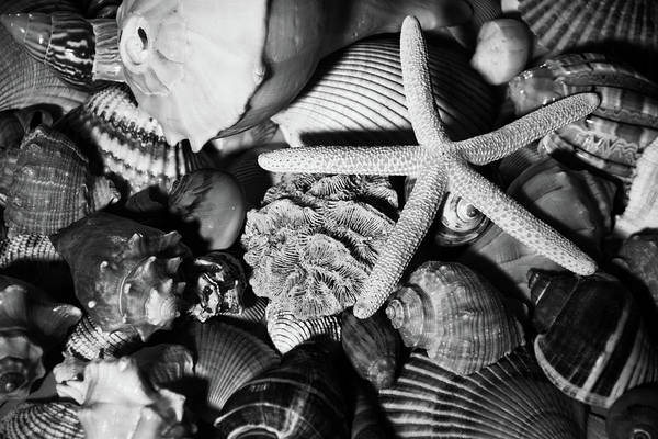 Photograph - Shells And Starfish In Black And White by Angie Tirado