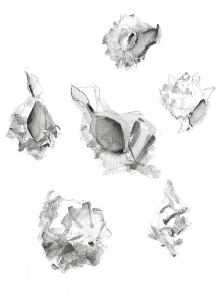 Summer Drawing - Shells by Chris N Rohrbach