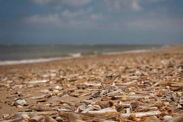 Photograph - Shells Forever by Nick Bywater