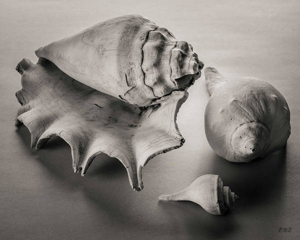 Photograph - Shells IIi Toned by David Gordon