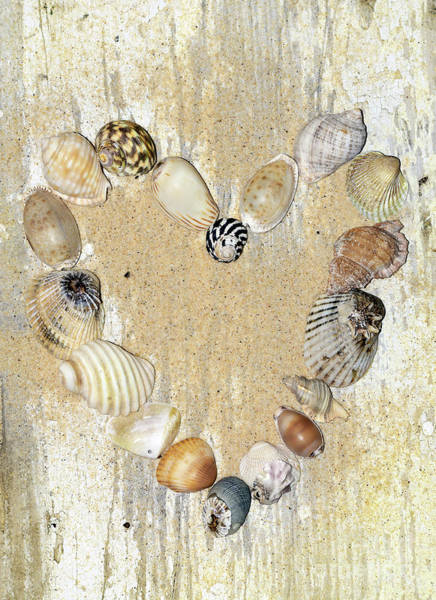 Wall Art - Photograph - Shells Of The Heart By Kaye Menner by Kaye Menner