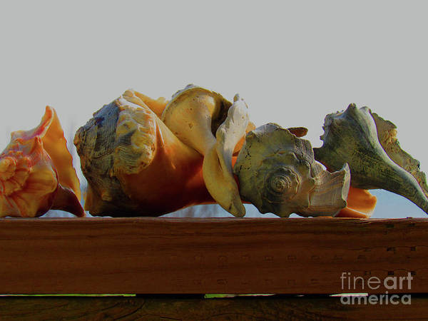 Shells Of The Sea In Orange And Gray Art Print