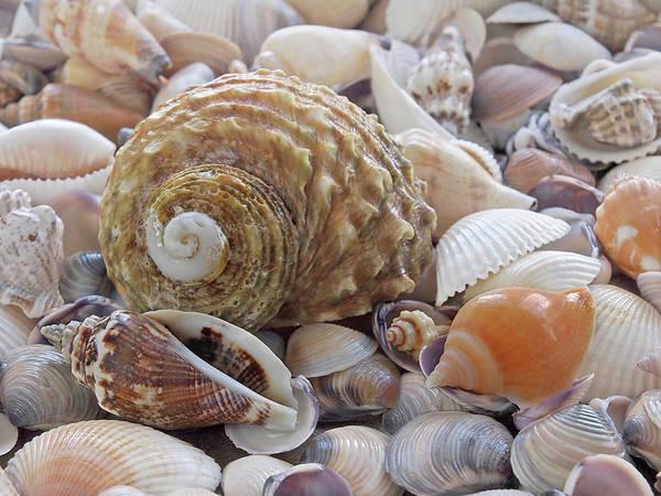 Photograph - Shells On The Beach by Gill Billington