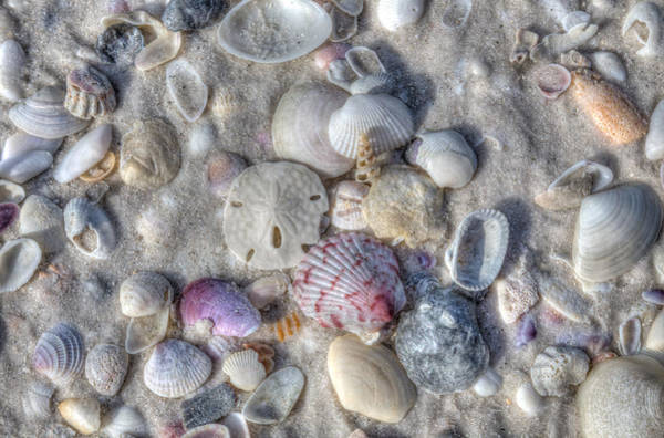 Photograph - Shells, Siesta Key, Florida by Paul Schultz