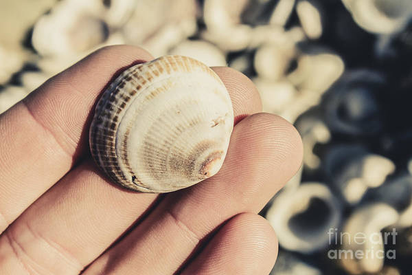 Photograph - Shelly Point Beach by Jorgo Photography - Wall Art Gallery
