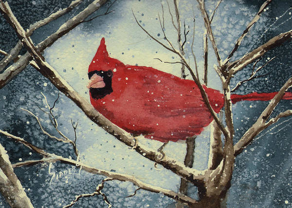 Painting - Shelly's Cardinal by Sam Sidders