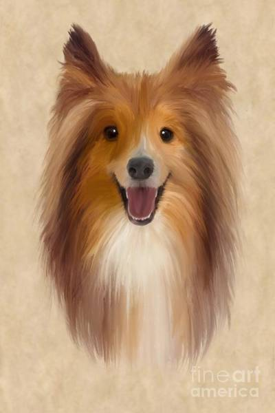 Furry Digital Art - Sheltie by John Edwards