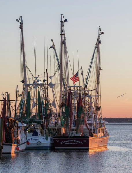 Photograph - Shem Creek Gold  by Donnie Whitaker