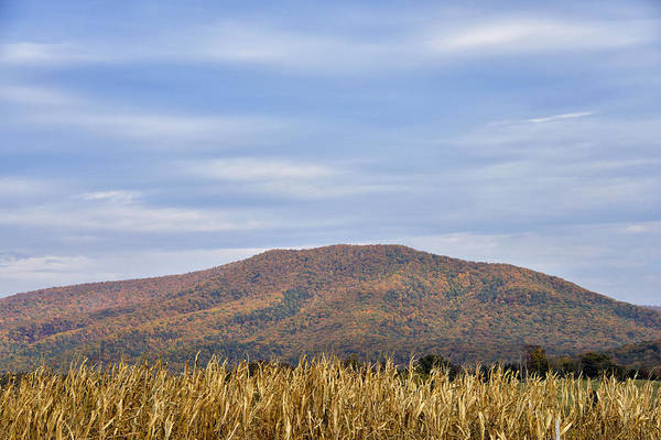 Wall Art - Photograph - Shenandoah Valley Autumn Cornfields - Virginia by Brendan Reals