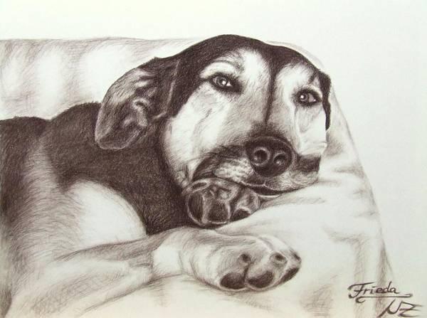 Hund Drawing - Shepherd Dog Frieda by Nicole Zeug