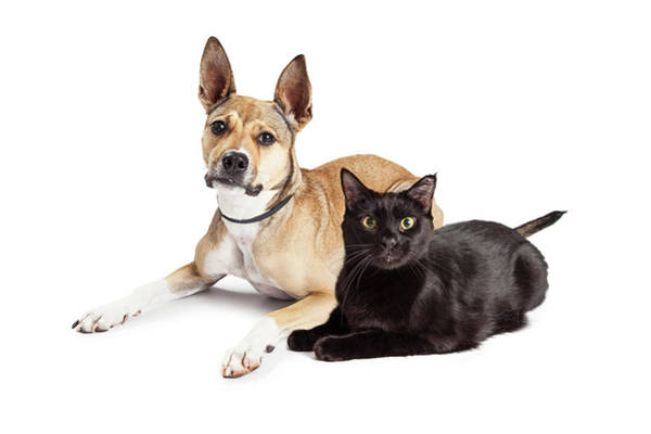 Wall Art - Photograph - Shepherd Mix Dog And Black Cat Laying Together by Susan Schmitz