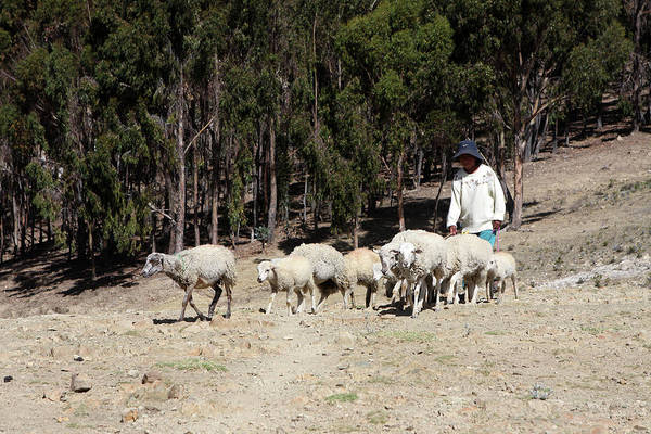 Photograph - The Shepherd Boy by Aidan Moran