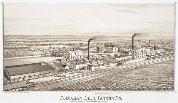 Wall Art - Painting - Antique Map Of Sherman Oil And Cotton County by Thaddeus Mortimer Fowler