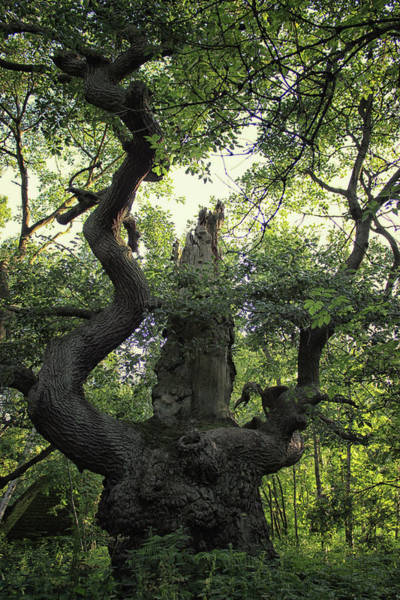 Nottinghamshire Photograph - Sherwood Forest by Martin Newman