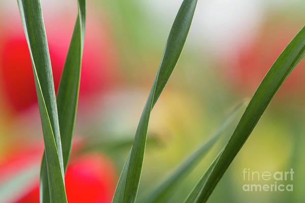 Photograph - Sherwood Gardens 14 by Chris Scroggins