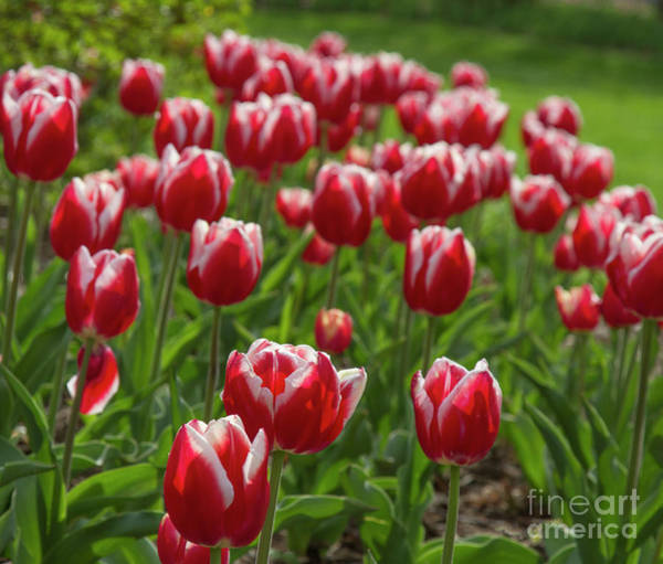 Photograph - Sherwood Gardens 19 by Chris Scroggins